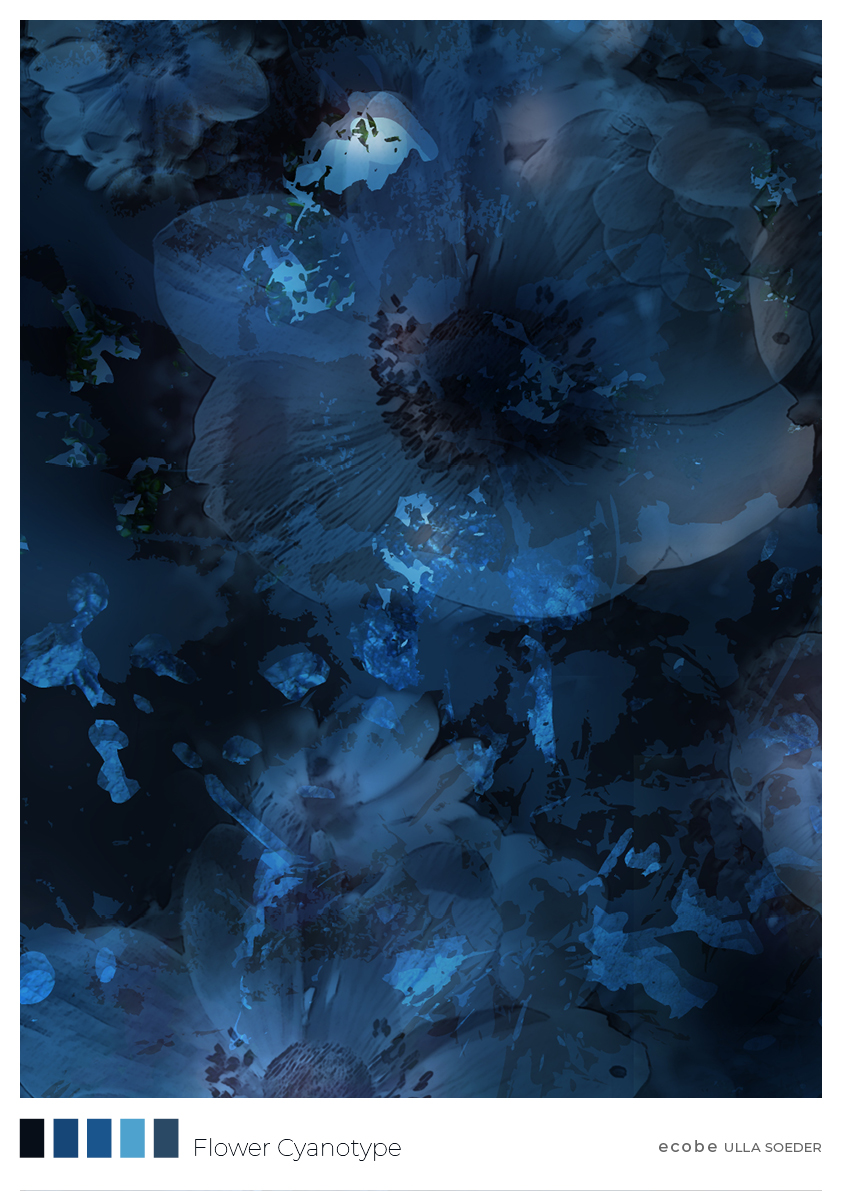 Flower Cyanotype Dark